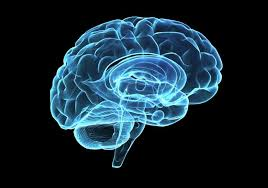"""Brain Science Innovator Interprets the Psychology and Brain Biology of """"Whatever"""""""